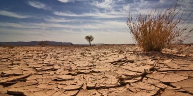 COP22: Adaptation, Agriculture, Afrique