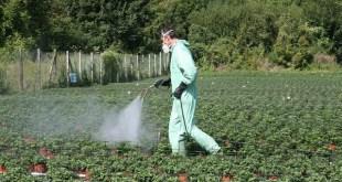 L'Espagne, premier marché des produits phytosanitaires