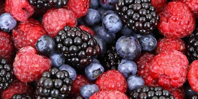 Le festival national des petits fruits rouges à Larache
