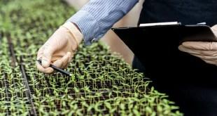 OGM ou non ? Les « New breeding techniques » en stand-by