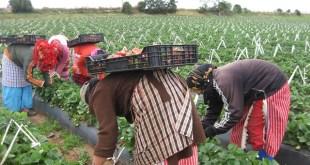 Les femmes ont leur place dans l'agriculture marocaine