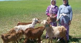 Le travail agricole des femmes rurales