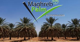 Idyl lance Maghreb Palm