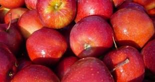 Les pommes contaminées par les pesticides