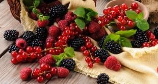 """Le CHA organise le 14 mai son forum annuel: """"Les fruits rouges : une culture d'avenir pour le Souss-Massa"""""""