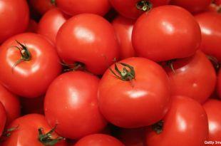 La tomate marocaine satisfait les partenaires européens et marocains  (ph:leseco)