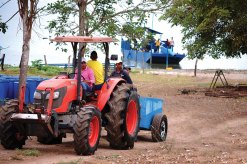 Proceso de cosecha de tilapia roja