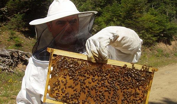 μελισσοκομία