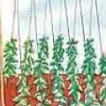 ENTUTORADO DE PLANTAS