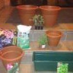 Plantas aromáticas en macetas: cultivando desde cero