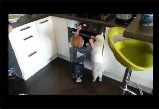 قط يبعد طفل عن موقد الغاز