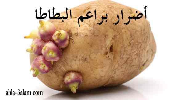 أضرار براعم البطاطا هل يمكن تناولها تحذير هام !