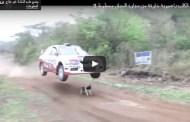 فيديو نجاة كلب بأعجوبة من حادث مروع خارقة للعادة ربما هو كلب محظوظ !!