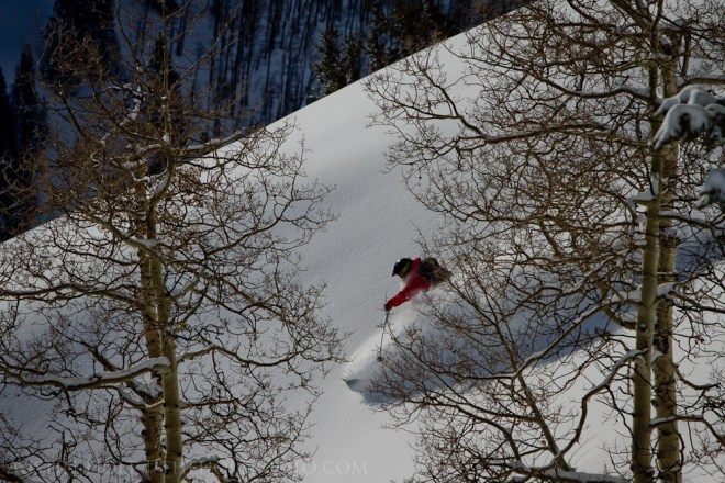 A photograph of a backcountry skier making a turn in powder snow through the trees in Utah.