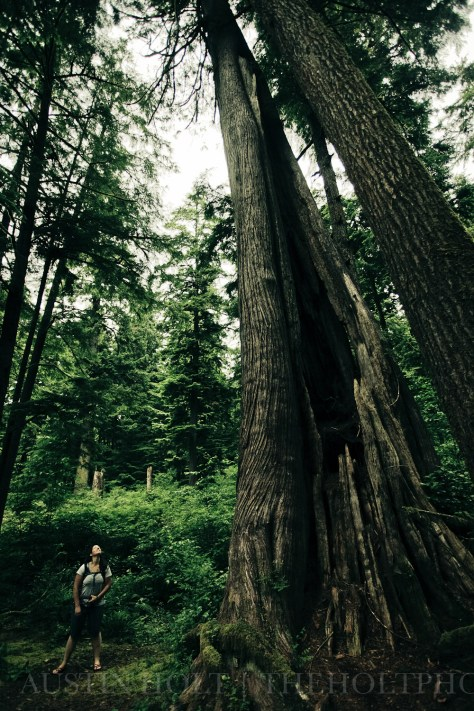 Photographer Re Wikstrom peers up into the canopy of a stand of old growth trees in Oregon.