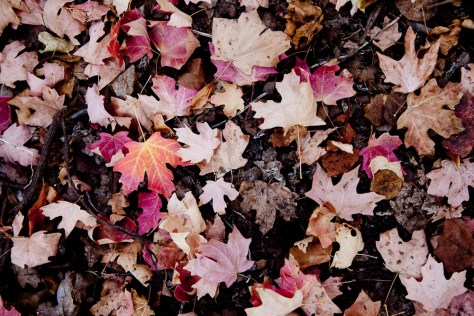 Fallen, brightly colored leaves on the ground in Park City, Utah