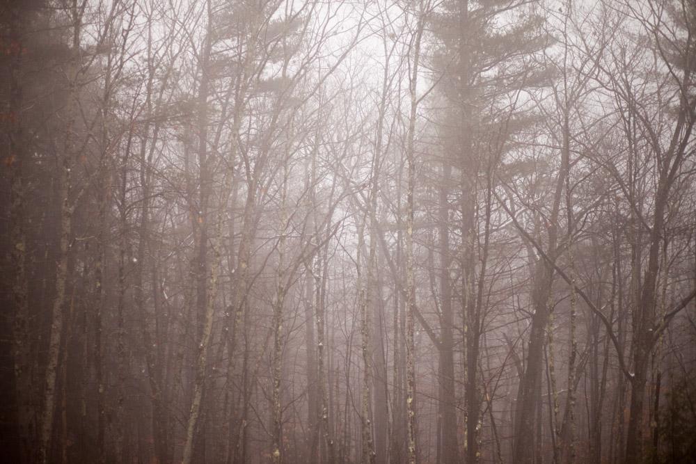 Fog hangs in the forest in Sebago, Maine