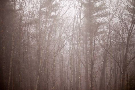 Fog hangs in the forest in Sebago, Maine