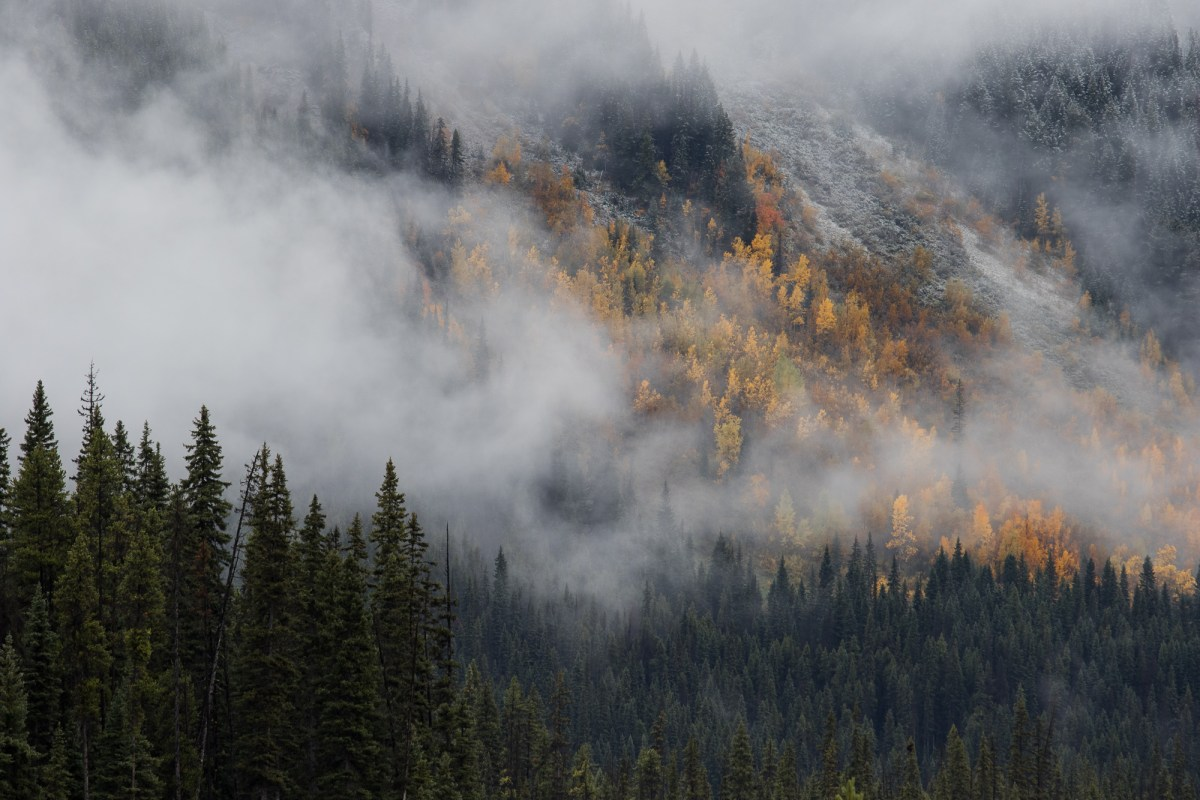 Snow, Fog, and Foliage in the mountains Canada