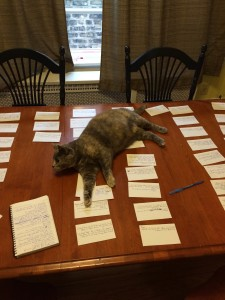 cat on notecards
