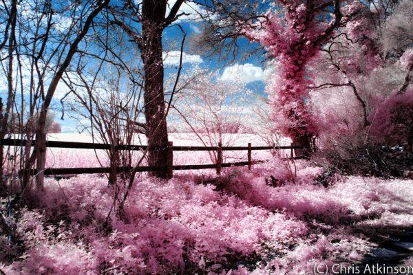 Garston Wood – Infrared Spring