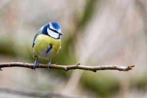 February Woodland Birds