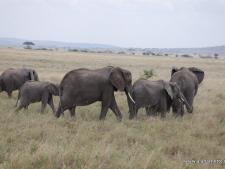 The Serengeti Big 5