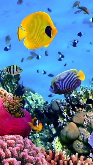 3d Aquarium Live Wallpaper For Windows 7 تحميل خلفية متحركة اسماك المحيط Ocean Fish Live Wallpaper