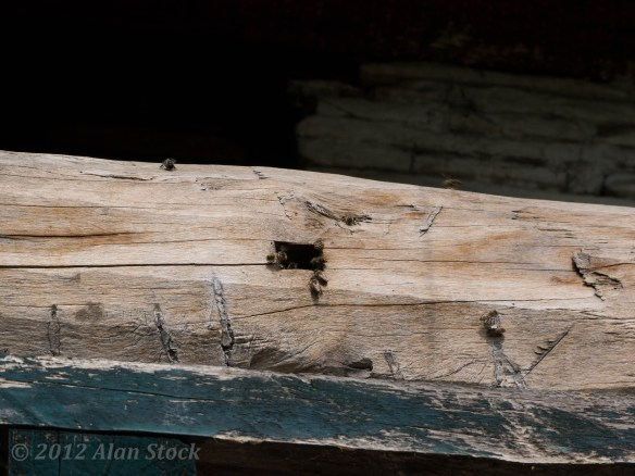 Bees in their little log hive