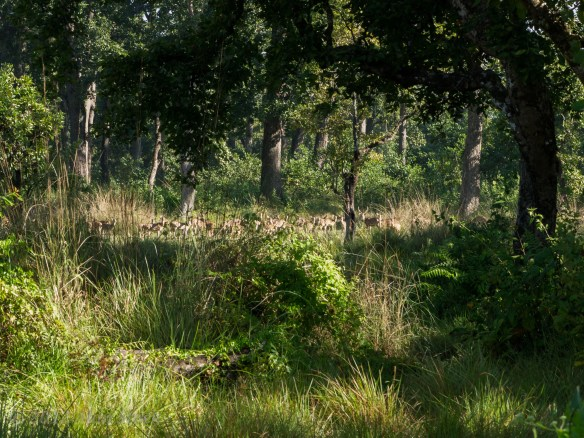Some of the deer herd. Unfortunately my big zoom lens was still broken at this point!