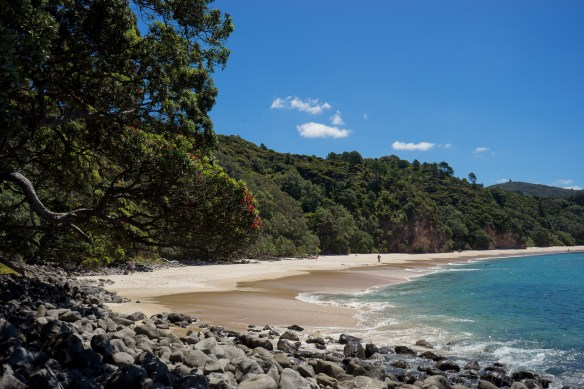 Coromandel peninsula New Chum beach