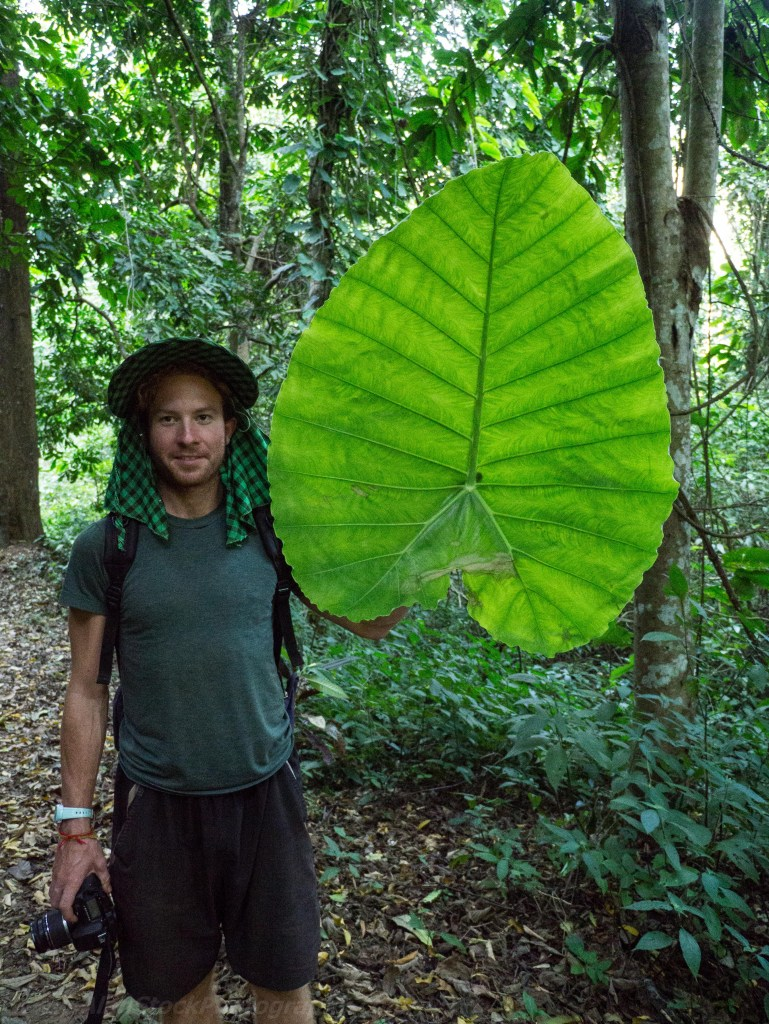 Travelmate Backpacker Jungle Huge Leaf Tropical