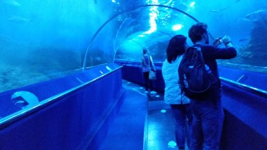 AQWA underwater tunnel