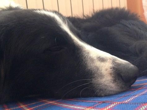 Lucky dorme in appartamento, ma poi si sfoga all'aperto