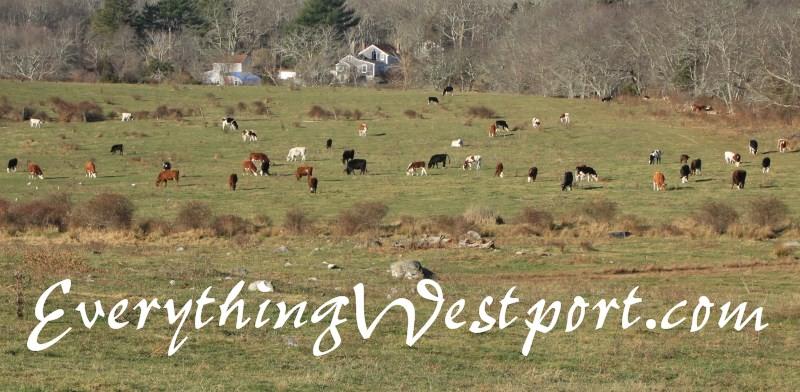 Community Events of Westport ™