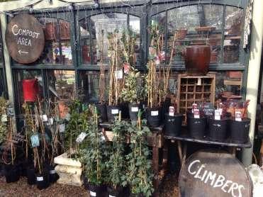 Climbers & Greenhouse