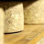 Maturing Ashmore Cheese