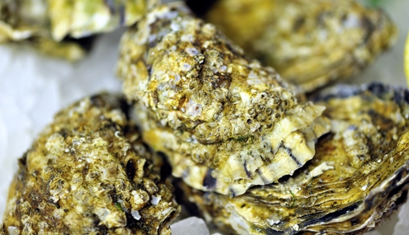 Local Whitstable oysters