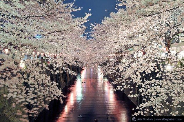 The Meguro River in Nakameguro, Tokyo