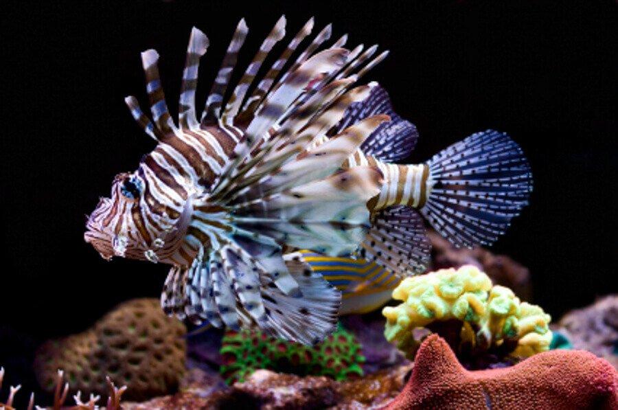 Converting a freshwater aquarium to saltwater