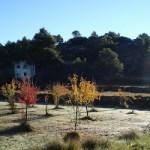 Miércoles y fondo forestal