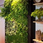 Jardín vertical de interior en Barcelona