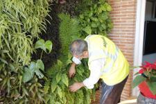 mantenimiento de jardines verticales mantenimiento de jardín vertical paredes verdes ecosistemas verticales green wall cuidados limpieza poda tratamientos fitosanitarios orgánicos
