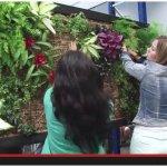 Curso de Jardines Verticales – Nuevo vídeo