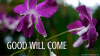 Good Will Come Orchid