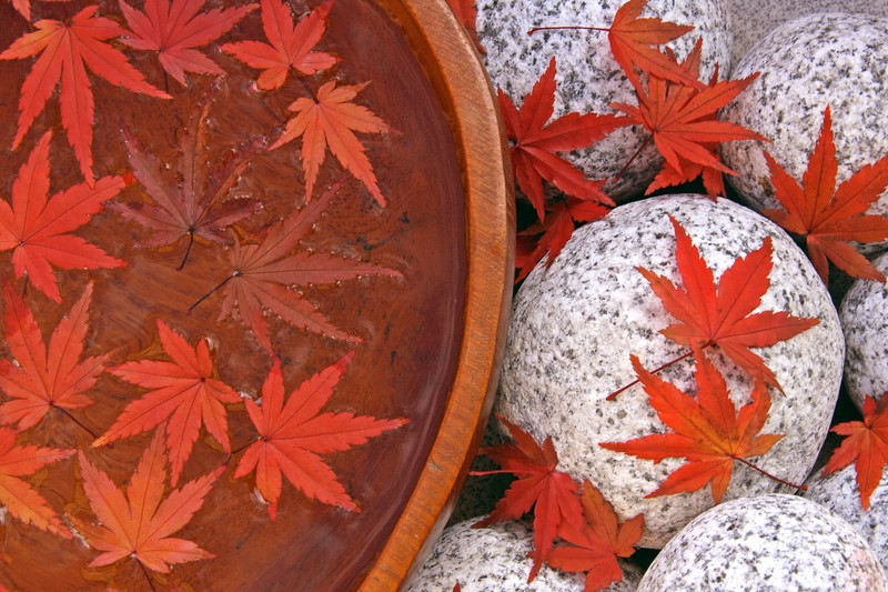 Fall Pumpkin Wallpaper Hd Health Tips For Fall Wellness Aligned Modern Health