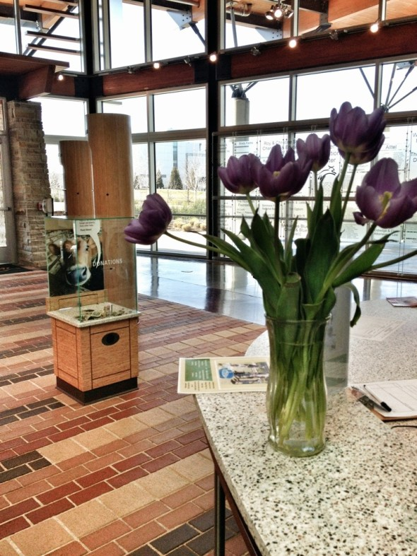 march tulip madness, heifer village