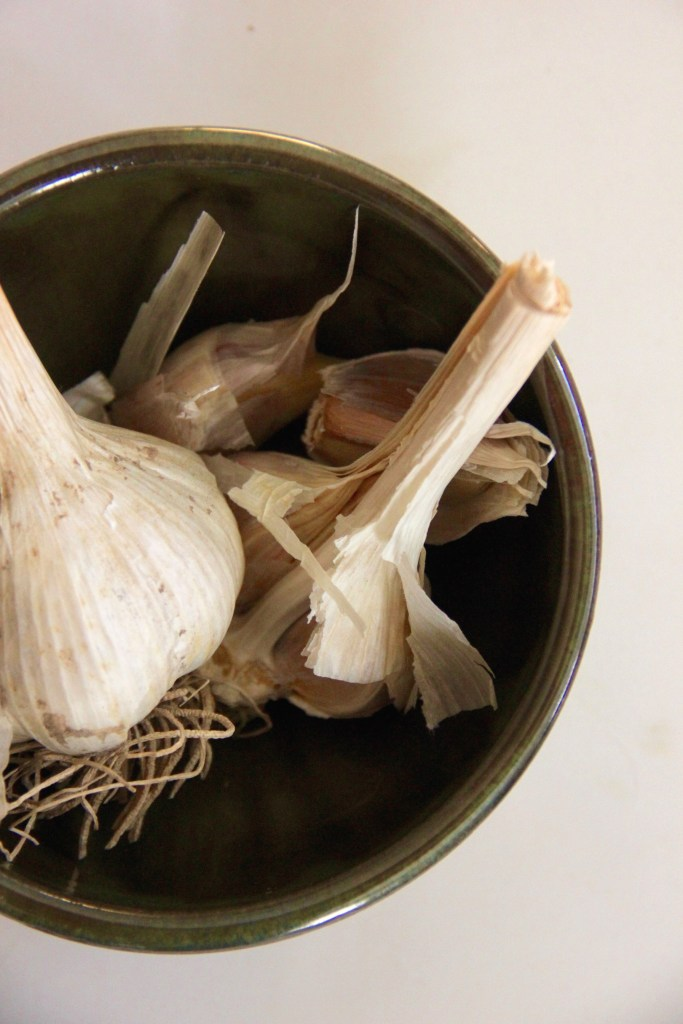 Want to save money and grow lots of garlic at home? Start planting this fall and grow lots for the spring!