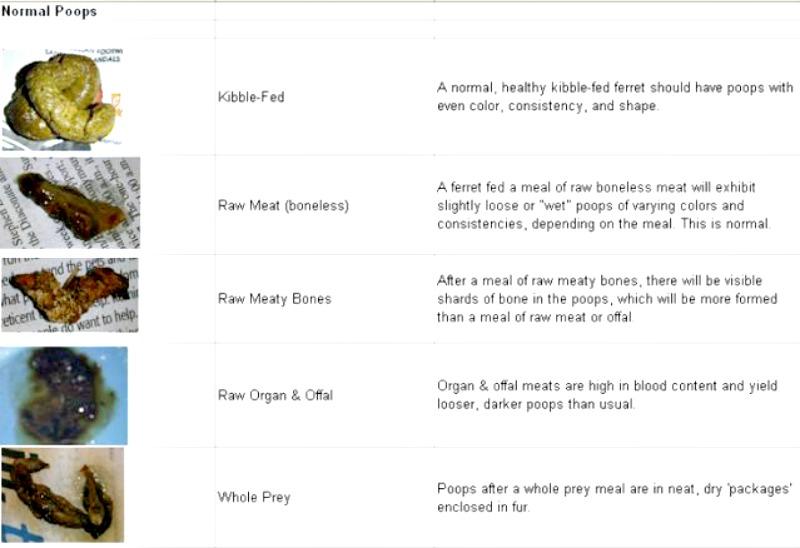 Ferret Poop - stool color chart