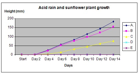Science Fair Projects - Effect of acid rain on sunflower growth